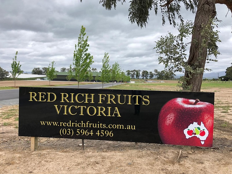 Red Rich Fruits-2